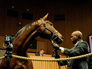 Congressional Law Impacts Horse Buyers