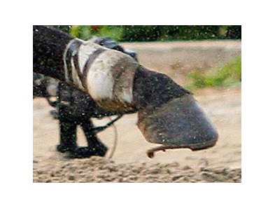 Big Brown's right rear shoe came loose shortly after the start of the Belmont Stakes (gr. I).