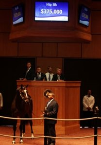 The top seller: Hip 86; colt, Malibu Moon - Uncontrollable by Wild Again brought $375,000.