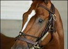 "Let's not forget Curlin.<br><a target=""blank"" href=""http://www.bloodhorse.com/horse-racing/photo-store?ref=http%3A%2F%2Fpictopia.com%2Fperl%2Fgal%3Fprovider_id%3D368%26ptp_photo_id%3D1375099%26ref%3Dstory"">Order This Photo</a>"