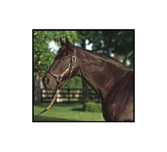 Triple Crown winner Seattle Slew.