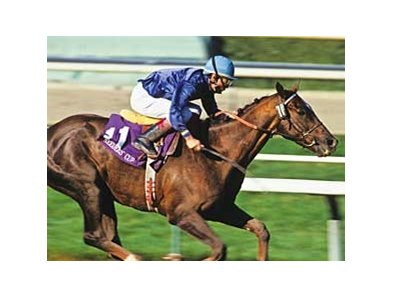 Arcangues won the 1993 Breeders' Cup Classic