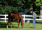 "Dullahan is the new 9-5 morning-line favorite in the Belmont Stakes<br><a target=""blank"" href=""http://photos.bloodhorse.com/TripleCrown/2012-Triple-Crown/Belmont-Stakes-144/23333063_3WZKbw#!i=1893765655&k=BVhKD7H"">Order This Photo</a>"