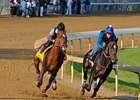 Animal Kingdom (left) works six furlongs in 1:13 April 30 at Churchill Downs