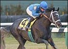 Top New York-Bred Grey Comet Euthanized