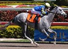 Gulfstream Park allowance winner Take the Points will run in the Kentucky Derby.
