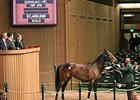 Ave, hip 276, sells for $1.4 million.