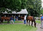 Yearlings at Fasig-Tipton's Saratoga select auction.