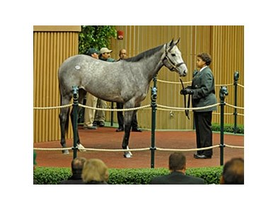 Flashy Gray, a daughter of Flashy Bull, sold for $775,000 to West Point Thoroughbreds and Tom Keithley.