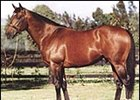Deceased stallion Danehill.
