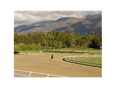 Due to drainage problems, Santa Anita will close the main track Dec. 3-10 to examine its Cushion Track surface.