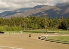 Santa Anita's Cushion Track