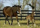 Shoppingwithbetty romps with Smarty Jones' first foal.