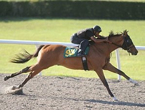 Johannesburg Colt Sizzles in OBS Preview