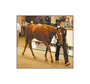 Giant's Causeway filly, topped Tattersalls' Houghton yearling sale.