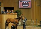 Hip 125 sold for $625,000 in the 2011 Keeneland January Sale.