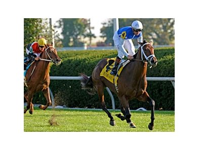 Interactif is the lone two-time graded stakes winner in the Breeders' Cup Juvenile Turf.