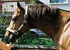 Tribunal,the 2006 leading freshman sire in Washington, died Jan. 8.
