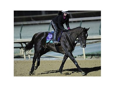 Tamarind Hall is set to be sold at the Fasig-Tipton November Sale.