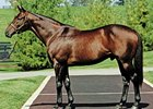 Derby Winner Real Quiet Dies