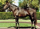 Premier Stallion Dynaformer Dies at 27