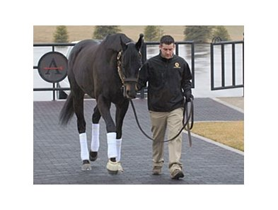 Einstein arrives at Adena Springs on Jan. 21.
