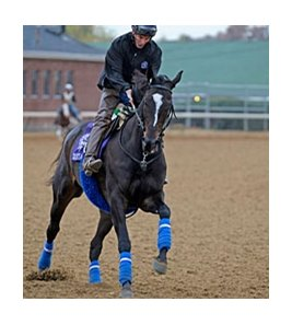 "Zenyatta checks out the track at Churchill Downs on Wednesday morning.<br><a target=""blank"" href=""http://www.bloodhorse.com/horse-racing/photo-store?ref=http%3A%2F%2Fpictopia.com%2Fperl%2Fgal%3Fprovider_id%3D368%26ptp_photo_id%3D9262494%26ref%3Dstory"">Order This Photo</a>"