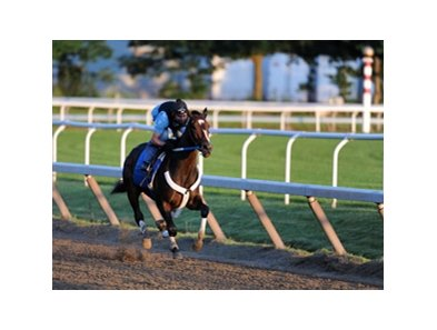 "Rachel Alexandra covers the 5 furlong work at the Oklahoma Training Track in Saratoga Springs.<br><a target=""blank"" href=""http://www.bloodhorse.com/horse-racing/photo-store?ref=http%3A%2F%2Fpictopia.com%2Fperl%2Fgal%3Fprovider_id%3D368%26ptp_photo_id%3D8322404%26ref%3Dstory"">Order This Photo</a>"
