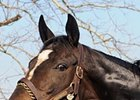 "Zenyatta<br><a target=""blank"" href=""http://www.bloodhorse.com/horse-racing/photo-store?ref=http%3A%2F%2Fpictopia.com%2Fperl%2Fgal%3Fprovider_id%3D368%26ptp_photo_id%3D9447963%26ref%3Dstory"">Order This Photo</a>"