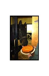 Triple Crown winner Seattle Slew eats a carrot cake fed to him by handler Tom Wade.