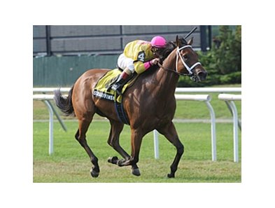 "Stradivinsky is in control in the Jaipur Stakes.<br><a target=""blank"" href=""http://www.bloodhorse.com/horse-racing/photo-store?ref=http%3A%2F%2Fpictopia.com%2Fperl%2Fgal%3Fprovider_id%3D368%26ptp_photo_id%3D9110078%26ref%3Dstory"">Order This Photo</a>"