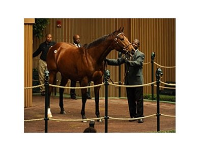 Cat Moves, hip 69, sold for $2.4 Million during the Keeneland November Sale.