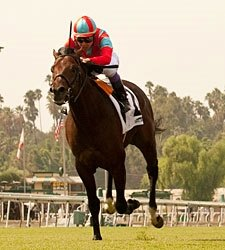 Trailblazer Continues Breeders' Cup Work