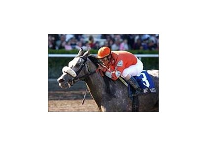 Sabin Handicap winner Swap Fliparoo, 1 of 2 entries for Allen Jerkens in the Bed O' Roses
