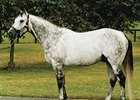 Kentucky Derby (gr. I) winner Monarchos will stand the 2008 breeding season at Nuckols Farm.
