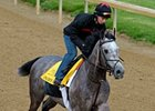 "Paddy O'Prado<br><a target=""blank"" href=""http://www.bloodhorse.com/horse-racing/photo-store?ref=http%3A%2F%2Fpictopia.com%2Fperl%2Fgal%3Fprovider_id%3D368%26ptp_photo_id%3D8917623%26ref%3Dstory"">Order This Photo</a>"