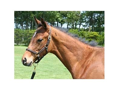 The bay colt by Deep Impact, out of 1995 champion Japanese juvenile filly Biwa Heidi, could top the JRHA sale.