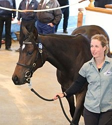 Galileo Filly Shines at Tattersalls Oct. Sale