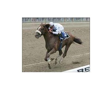 Tiger, ridden by Eibar Coa, captures the Bold Ruler, Saturday at Belmont Park.