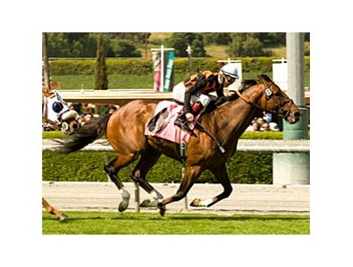 "Dixie Chatter powers to a victory in the Arcadia.<br><a target=""blank"" href=""http://www.bloodhorse.com/horse-racing/photo-store?ref=http%3A%2F%2Fpictopia.com%2Fperl%2Fgal%3Fprovider_id%3D368%26ptp_photo_id%3D7980451%26ref%3Dstory"">Order This Photo</a>"