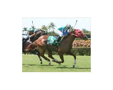 Dead Red right on target in Calder Turf Sprint.