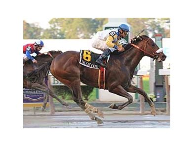 Tale of Ekati won the Jerome (gr. II) in sloppy conditions at Belmont Park.