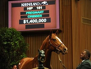 Coolmore Buys Second Seven-Figure Mare
