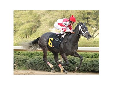 "Filly Eight Belles is among the 110 nominees for the Arkansas Derby.<br><a target=""blank"" href=""http://www.bloodhorse.com/horse-racing/photo-store?ref=http%3A%2F%2Fpictopia.com%2Fperl%2Fgal%3Fprovider_id%3D368%26ptp_photo_id%3D3918866%26ref%3Dstory"">Order This Photo</a>"