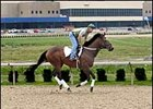 Darren Fleming and Golden Hare try out the new Tapeta surface at Presque Isle Downs.