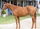 Half-Sister to Big Brown Fails to Sell