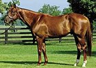 Smarty Jones Has First Winner in U.S.