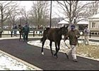 Sale horses are shown in outside walking ring at Fasig-Tipton.