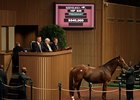 Tell It, a 15-year-old broodmare, was the day's most expensive offering, bringing $540,000 in Lexington Nov. 8.