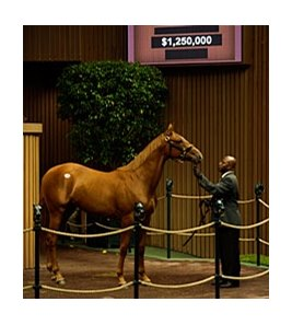 Hip 185 A.P.Indy-Private Gift